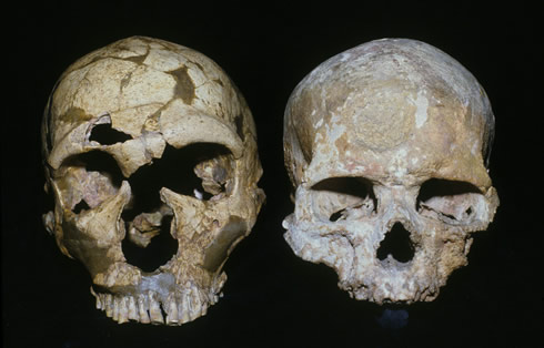 The La Ferrassie 1 (Neanderthal) and Cro-Magnon 1 (early modern) skulls