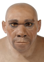 Model head of a Neanderthal man