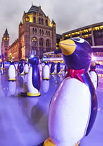 Penguin stabilisers at the Museum ice rink