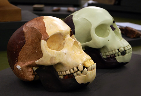 Two reconstructions of the Piltdown Man skull.