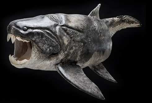 Model of Dunkleosteus, a member of the extinct fish group Placodermi.