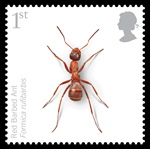 Red-barbed ant