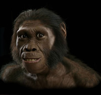 Model of what Australopithecus sediba may have looked like