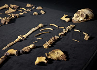 The A. sediba skeletons are the most complete skeletons of early human relatives ever found