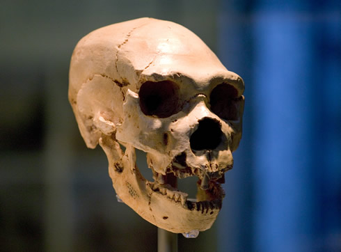 Fossil skull from Sima de los Huesos in Spain has many Neanderthal features.