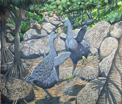 Artist and author Julian Hume's painting of two solitaire birds fighting.