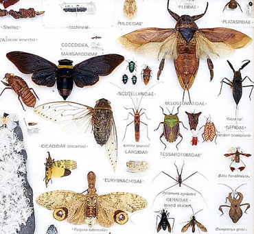 Specimen tray showing a small sample of the variety of insects that exist on Earth. Each species has