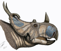 New horned dinosaur Spinops was identified from skull bones overlooked in the Museum collections