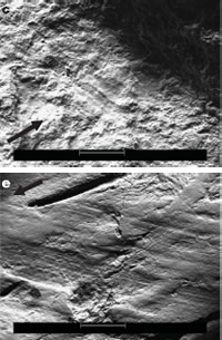 Images of fossil rib bone showing marks made by stone tools. Environmental Scanning Electron Microsc