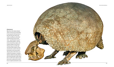 A giant relative of the modern armadillo, this extinct glyptodon grew to about 3m and is one of