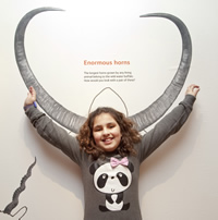 A child finds out about water buffalo horns, the longest horns grown by a living animal.