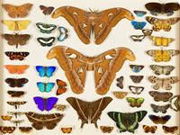Insects from Alfred Russel Wallace's personal collection