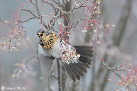 The frozen moment wins Veolia Environnement Young Wildlife Photographer of the