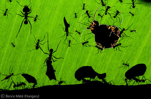 A marvel of ants wins Veolia Environnement Wildlife Photographer of the Year 2010