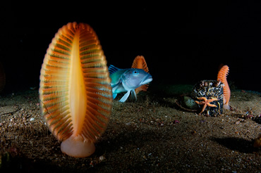 Underworld by Brian Skerry from the 2008 Wildlife Photographer of the Year Competition