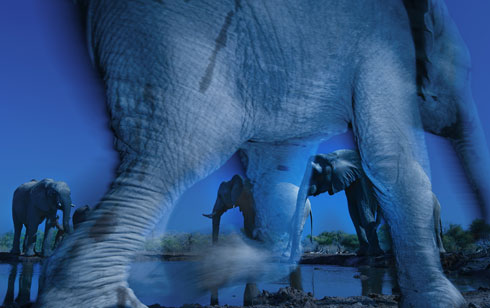 WPY2013-Essence-of-Elephants