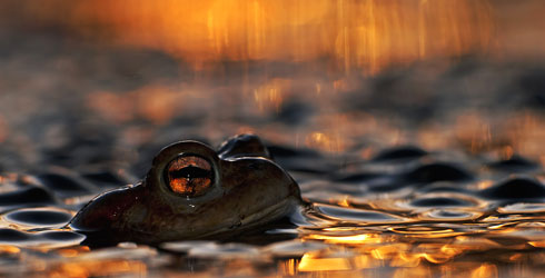 Lukasz-Bozycki_WPY_Eye-of-a-toad