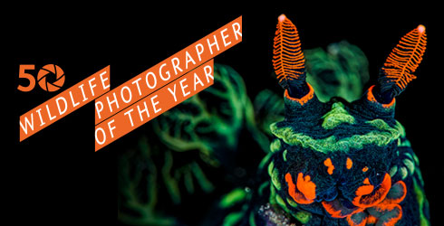 Wildlife Photographer of the Year exhibition at Tring