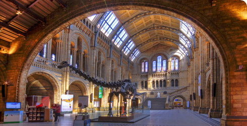 The Museum's Hintze Hall