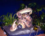 Animatronic snake model - Natural History Museum