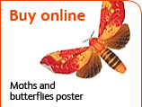Buy the moths and butterflies poster online