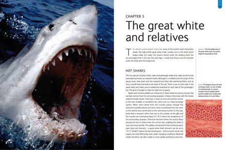 Pages from Sharks book