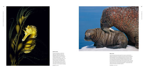 Pages from 50 Years of Wildlife Photographer of the Year