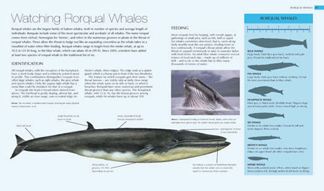 Pages from Whale Watcher