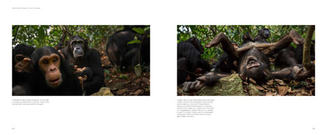 Pages from Tales from Gombe