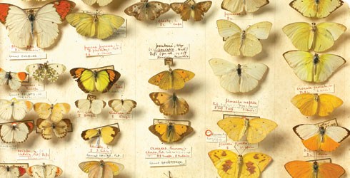 Butterflies and moths from our Treasures of the Natural History Museum book