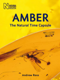 Amber cover image