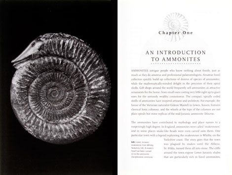Pages from Ammonites