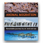 Animal Migration book