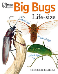 Big Bugs Life-size cover