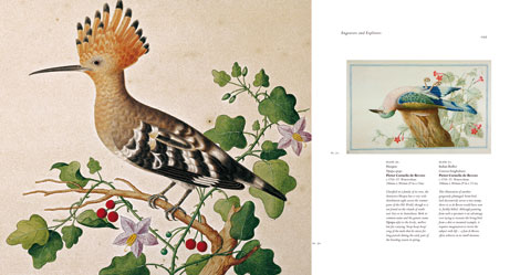 Pages from Birds: The Art of Ornithology