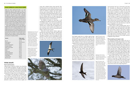 Pages from The World of Birds