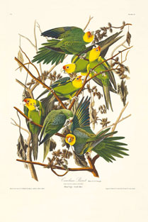 Birds of America pages