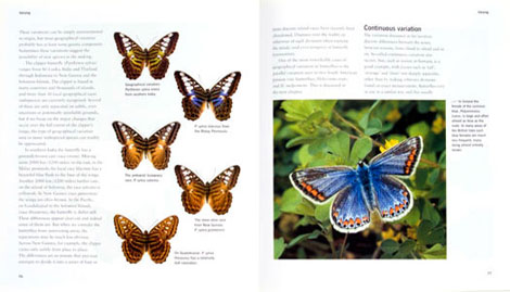 Pages from Butterflies
