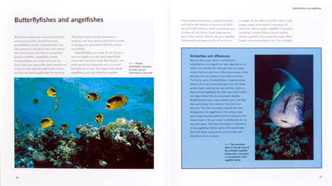 Pages form Coral Fish