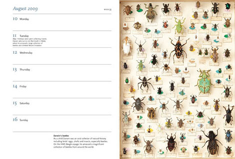 Pages from Darwin Diary 2009