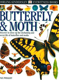 DK Eyewitness: Butterfly and Moth cover