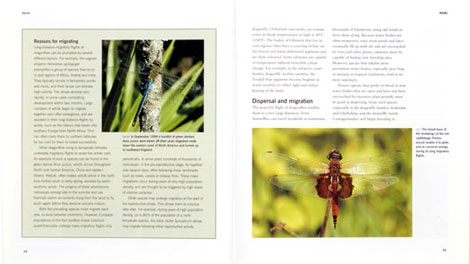 Pages from Dragonflies