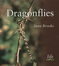 Dragonflies cover