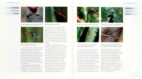Pages from Dragonflies of the World