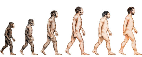 An illustration of hominid evolution by Victoria Edwards