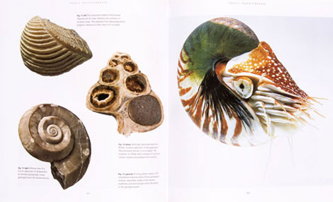 Pages from Fossil Invertebrates