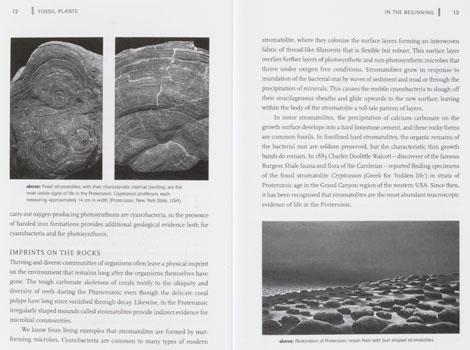 Pages from Fossil Plants