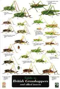 FSC Guide to British Grasshoppers and Allied Insects cover