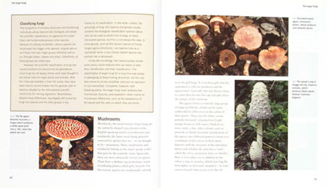Pages from Fungi