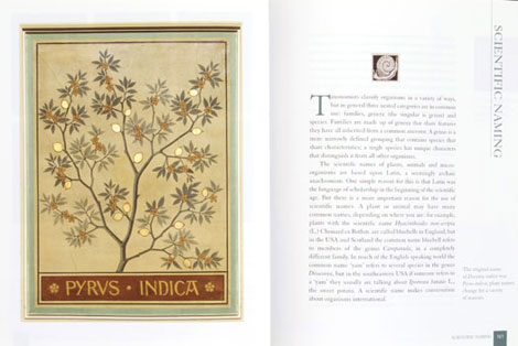 Pages from The Gilded Canopy